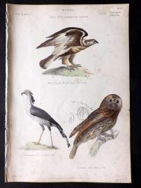 Richardson 1862 HC Bird Print. Rough Legged Buzzard, Secretary Bird, Brown Owl